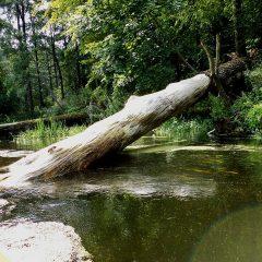 Rezerwat przyrody na rzece Wkrze