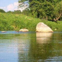 Głazy narzutowe w nurcie rzeki Wkry
