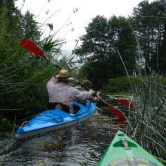 Spływ kajakowy - górny odcinek rzeki poniżej Lubowidza